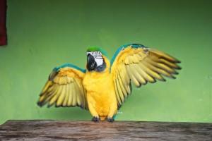 Open Arms Pantanal